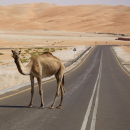 Car Travel in the UAE